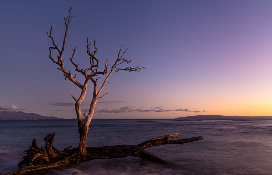 Lone Tree at Sunset - Jan Lightfoot