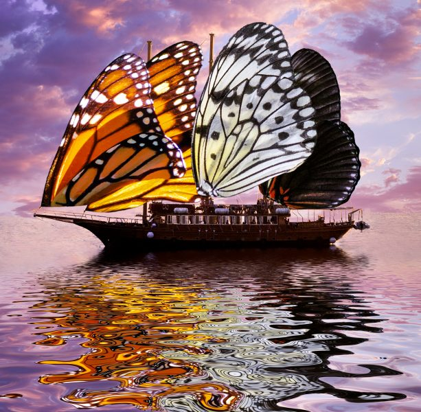 The Butterfly Ship - Jan Lightfoot