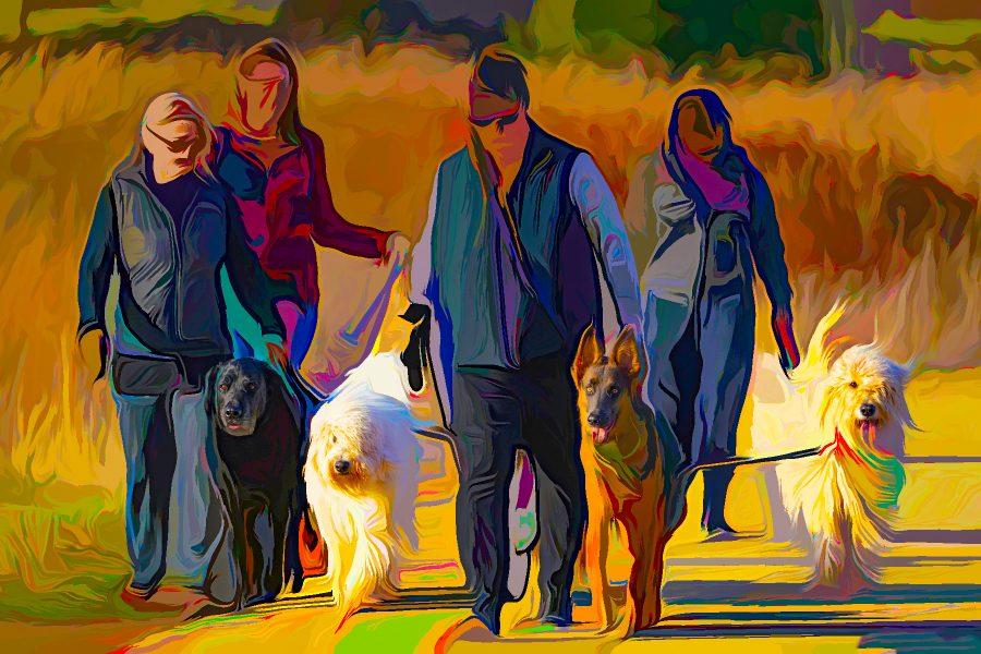 Dog Walking - Truman Holtzclaw
