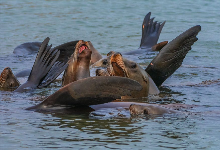Sea Lions warming up - Gary Ritchie