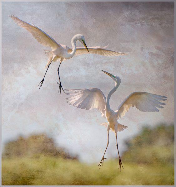 Shall We Dance - Jan Lightfoot