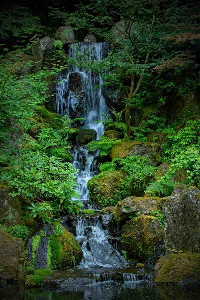 Waterfall, Oregon - Theo Goodwin