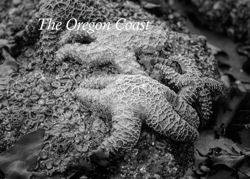 The Oregon Coast 01 - Pat Honeycutt