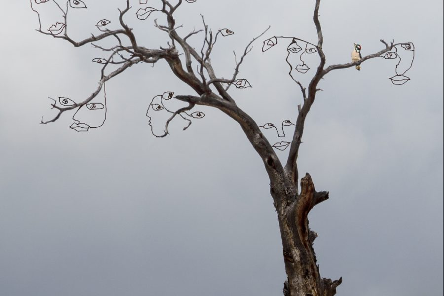 The Hidden Life of Trees - Jan Lightfoot