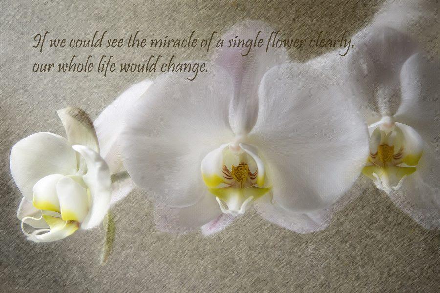 Orchid - Kathleen Grady