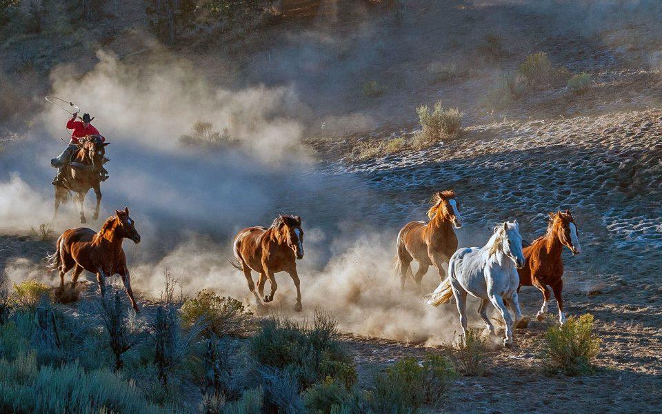 Horsedrive at Rockspring Ranch - Julius Kovatch