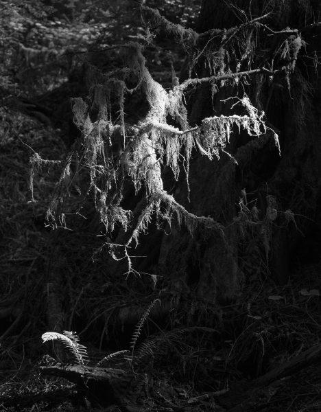 What Grows Beneath - Aaron Vizzini