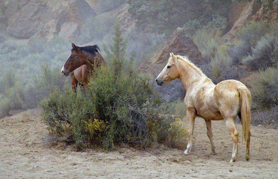 Horses at Rest - Julius Kovatch