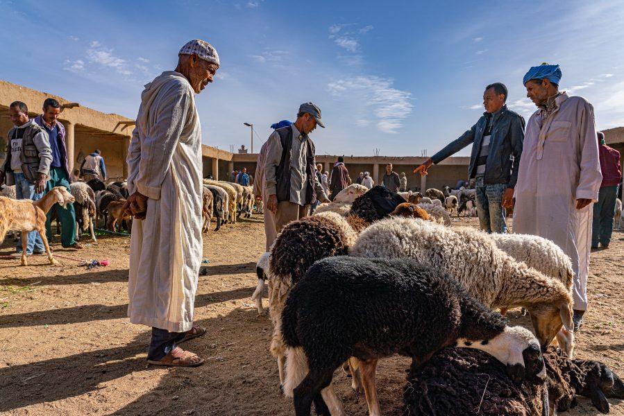 Shopping in Morocco 06 - Don Goldman