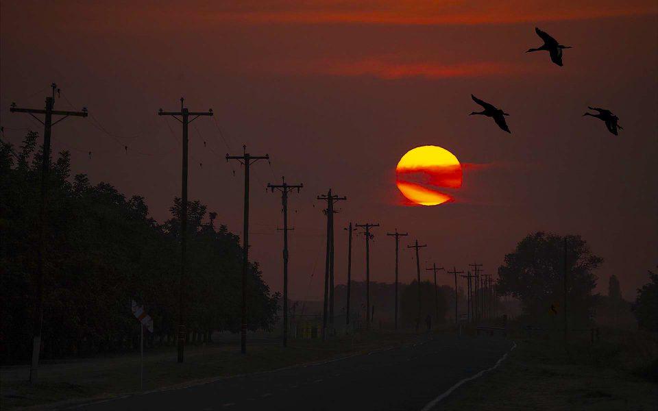 Returning Flight - Truman Holtzclaw
