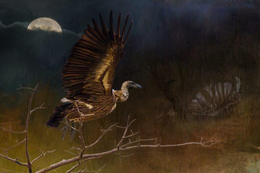 Night of the Vulture - Jan Lightfoot