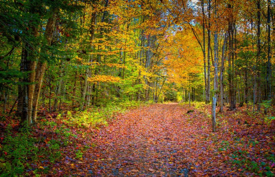 Vermont Country Lane In Autumn - Doug Arnold