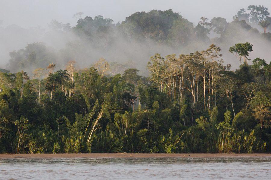 In the Amazon 07 - Jan Lightfoot
