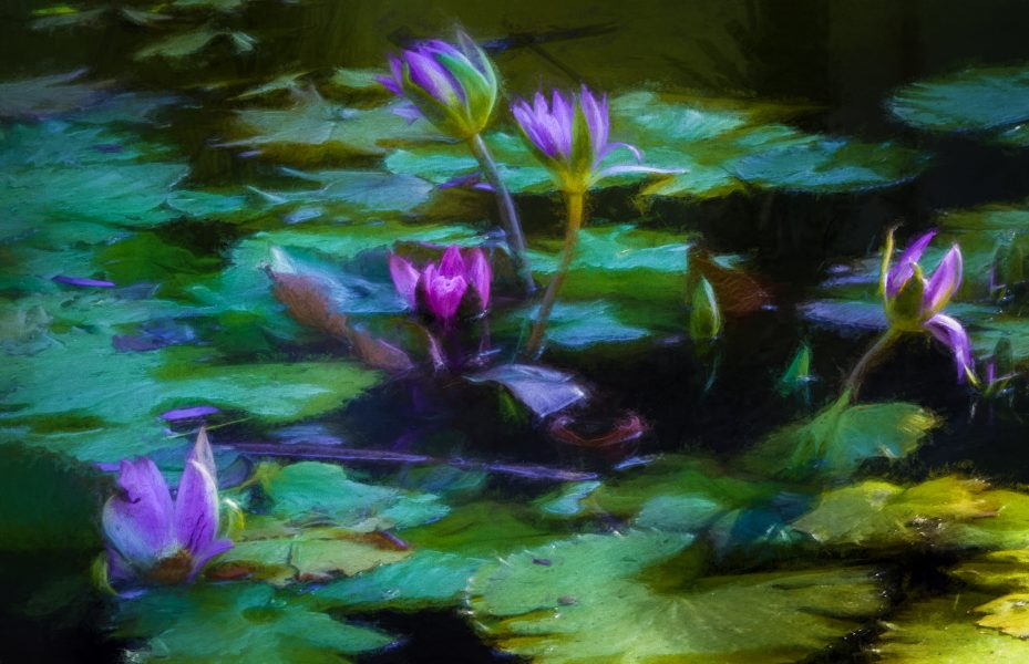 Water Lilies - Irene Berger