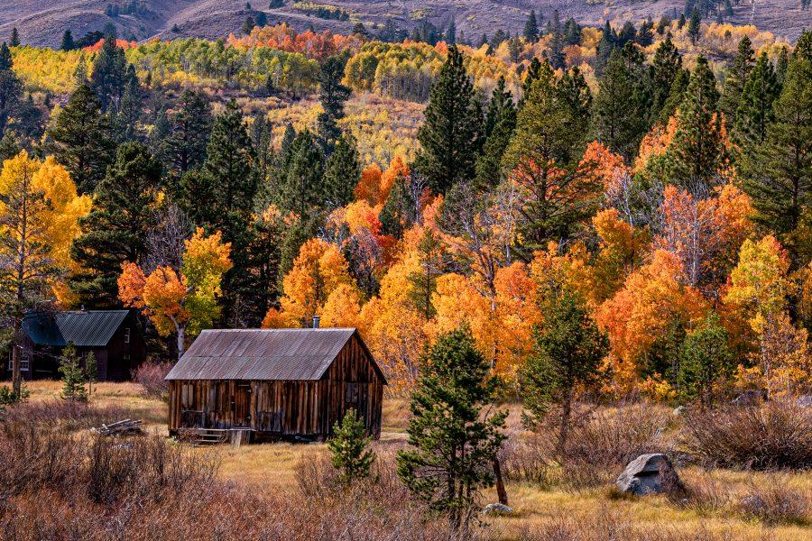 Fall Colors - Leonard James