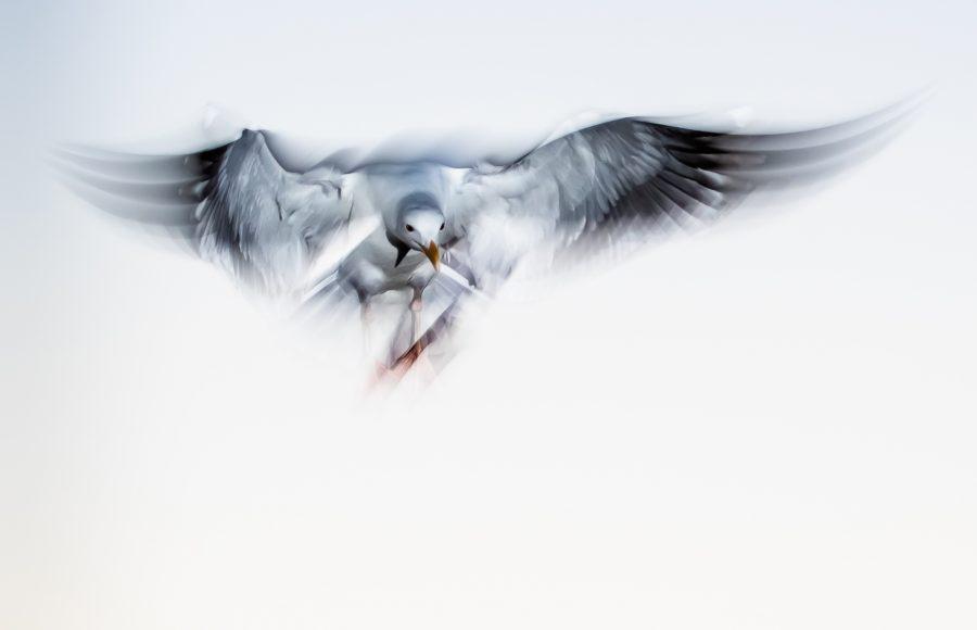 Fantasy Flight - Leonard James