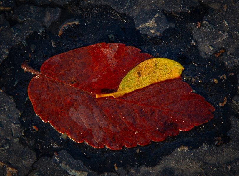 Two Fall Leaves - Kristian Leide-Lynch