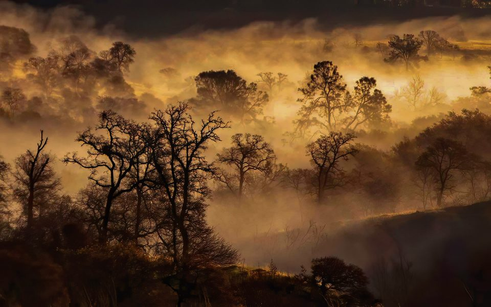 Foothills Morning Fog - Truman Holtzclaw