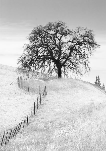 Tree And Fence - Paulo Oliveiro