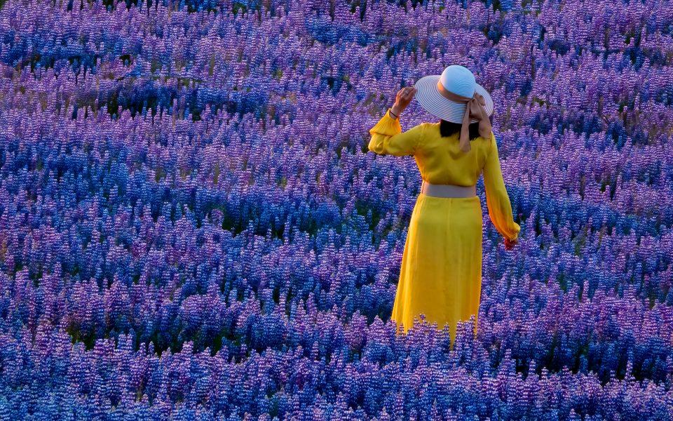 Lupine Lady at Sunset - Gert Van-Ommering