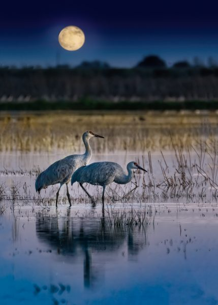 Harvest Moon Stroll - Lucille Van-Ommering