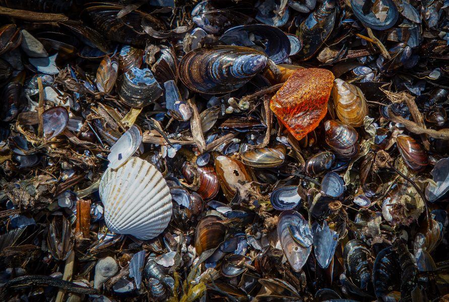Seashell and Amber on the beach - Kristian Leide-Lynch