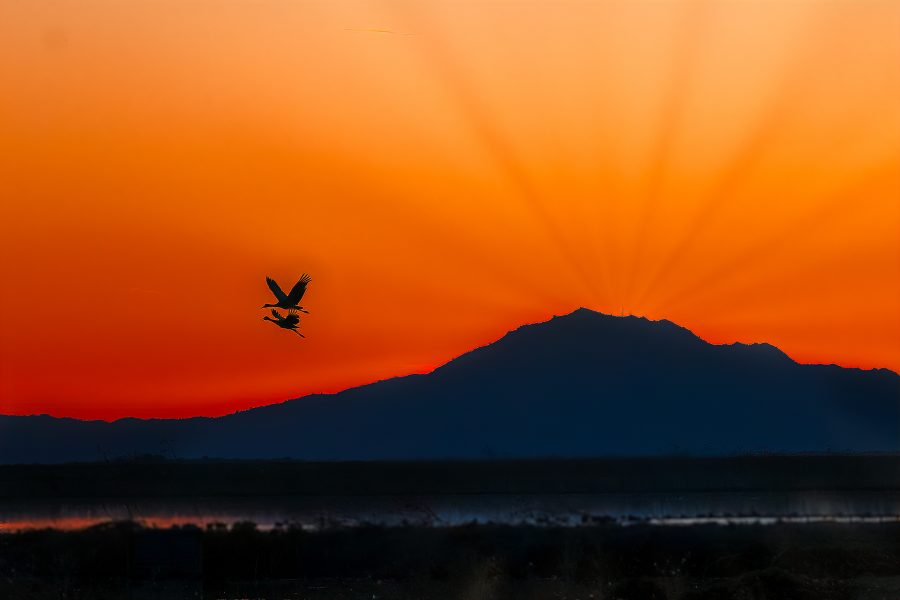 Sunset Flight, Sand Hill Cranes - Lucille Van Ommering