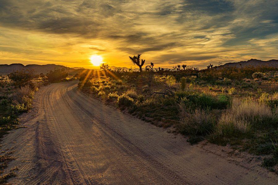 Into the Desert Sunset - Don Goldman