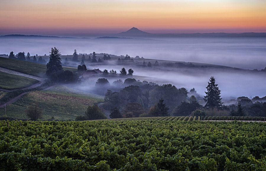 Dundee Hills Oregon - Kathleen Grady