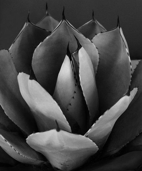 Succulent - Donna Sturla