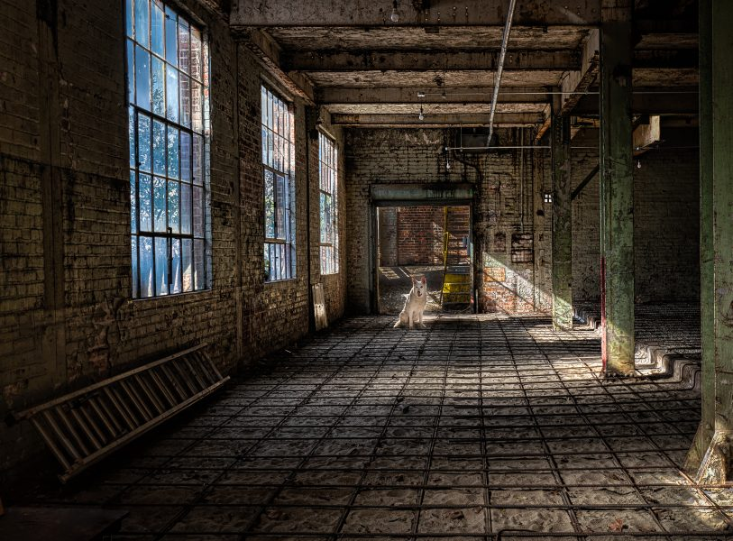 Sadie at the Old Sugarmill - Don Goldman