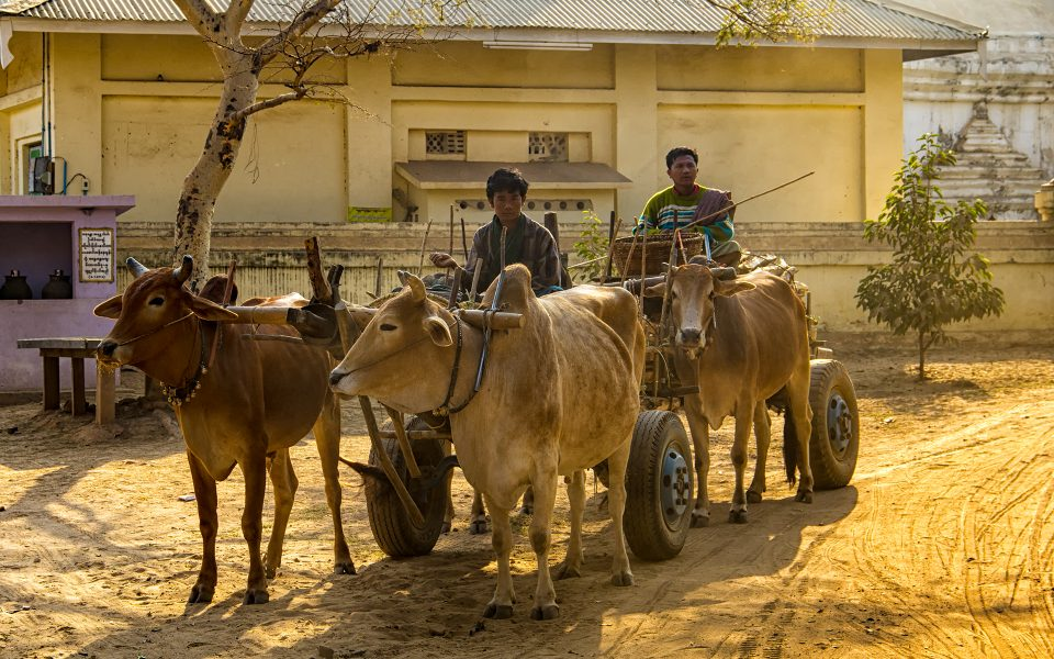 Local Transportation in Myanmar 06 - Gary Cawood