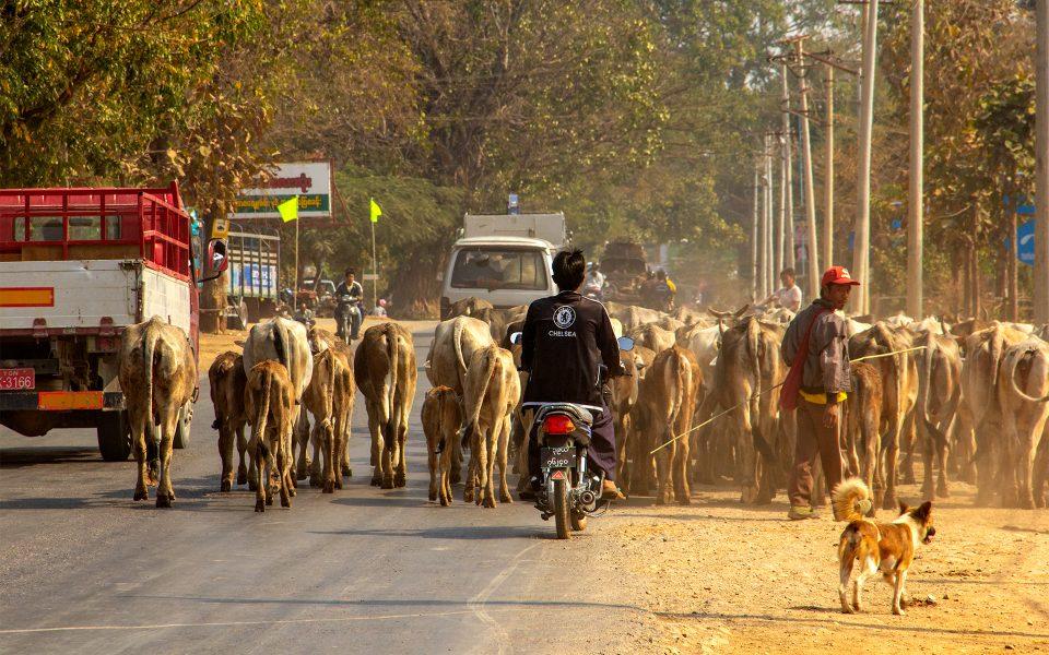 Local Transportation in Myanmar 07 - Gary Cawood