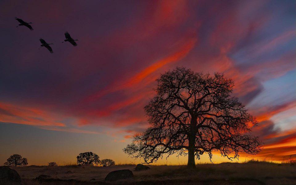 Sunset Flight - Truman Holtzclaw