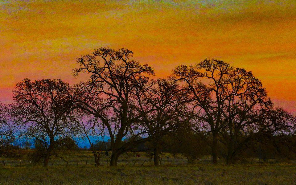 Silhouettes - Truman Holtzclaw