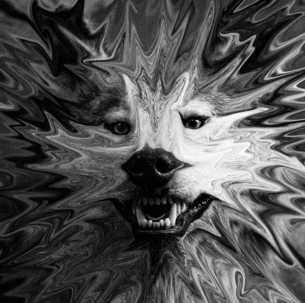 Melting Wolf - Irene Berger