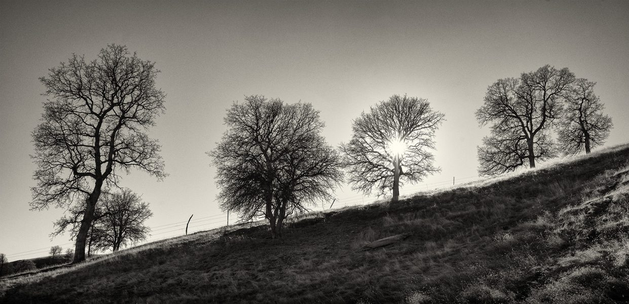 4 Trees - Dennis Scott