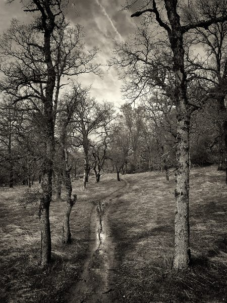 Olmstead Trail - Dennis Scott