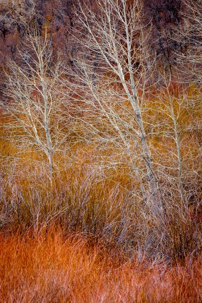 Bare Trees - Jan Lightfoot