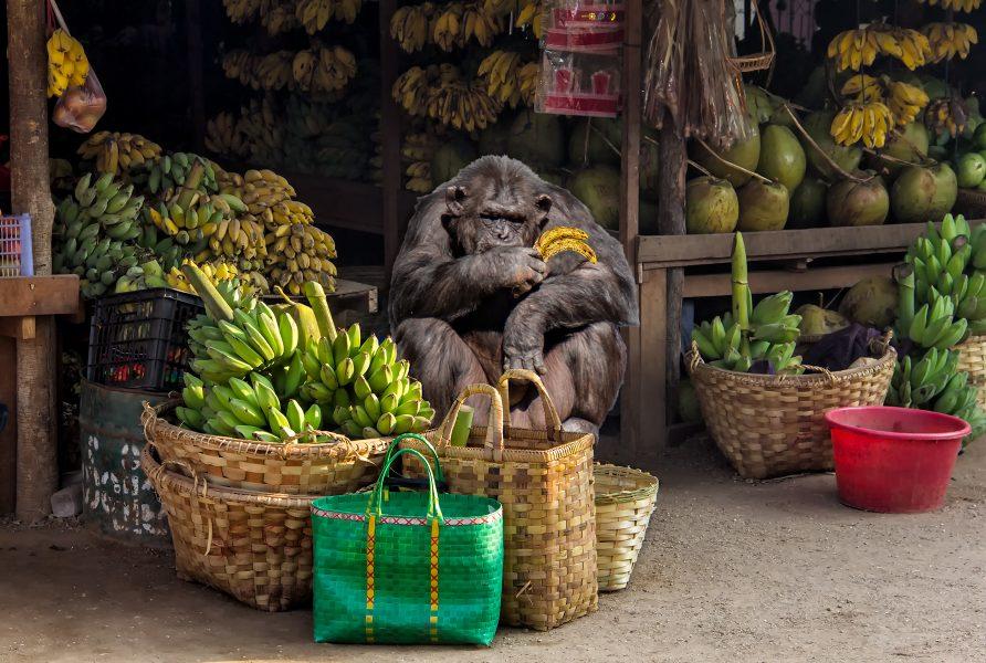 The Banana Salesman - Gary Cawood