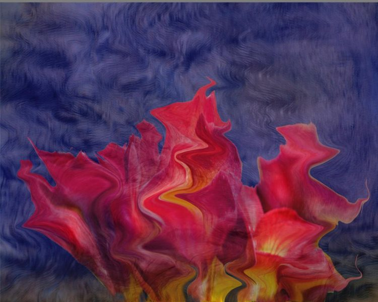 Flowers Aflame - Bob Hubbell