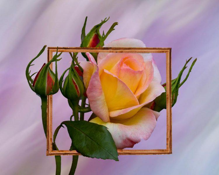 Framed - Bob Hubbell