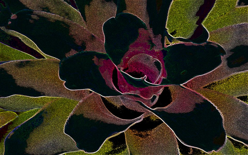 Cactus Flower - Gay Kent