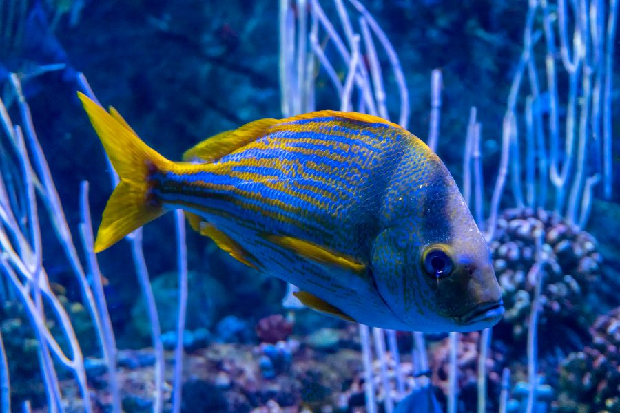 Western Pacific Coral Reef Fish - Gary Cawood