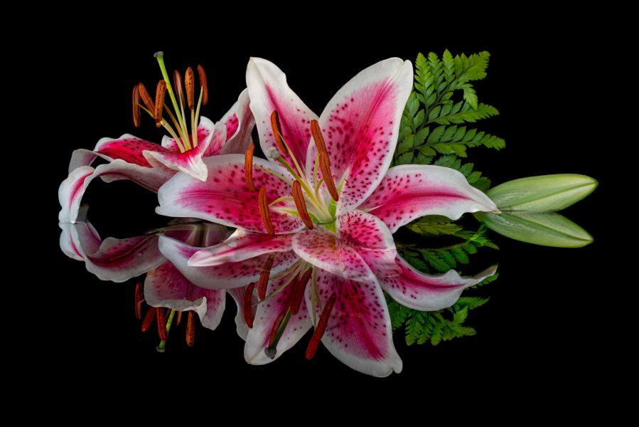 Lily Arrangement - Jan Lightfoot