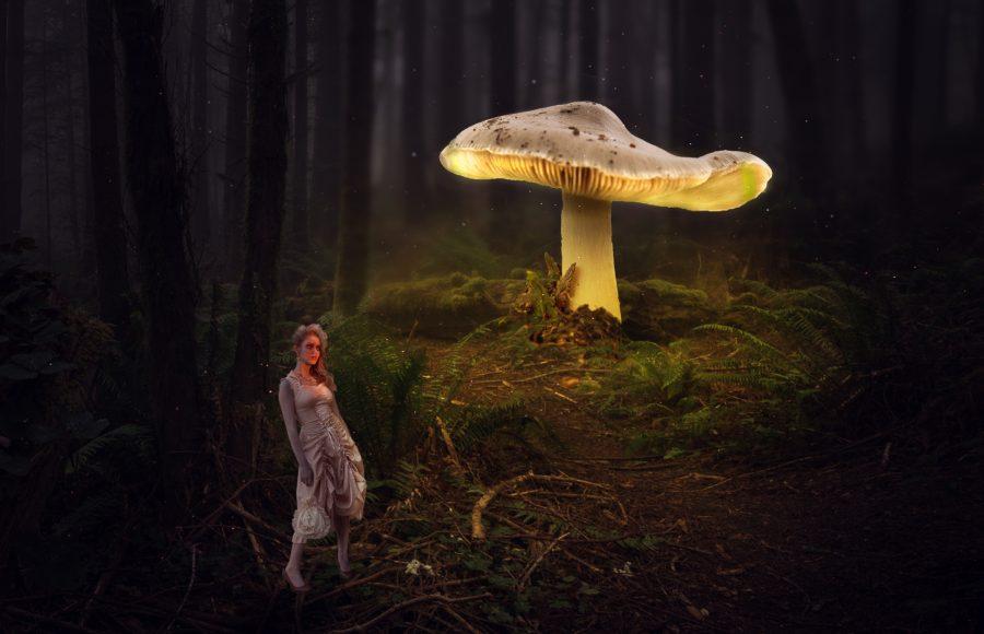 Glowing Mushroom - Don Goldman