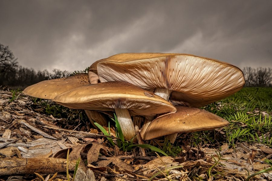 Magnificent Mushrooms - Don Goldman