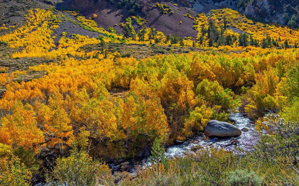 Autumn at Bishop Creek - Julius Kovatch