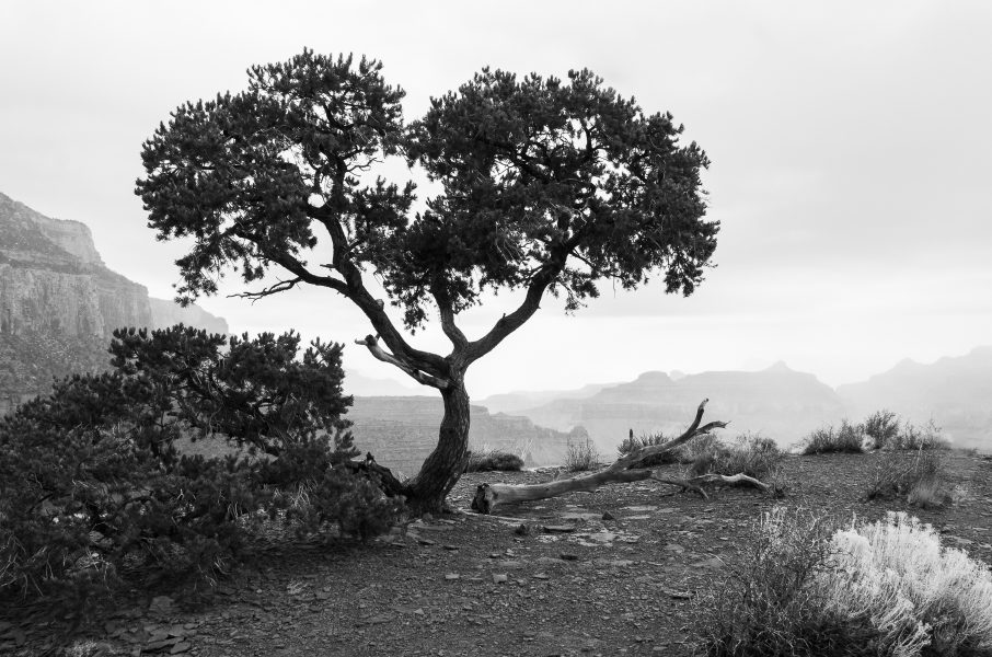 Descending into the Grand Canyon 04 - Aaron Vizzini