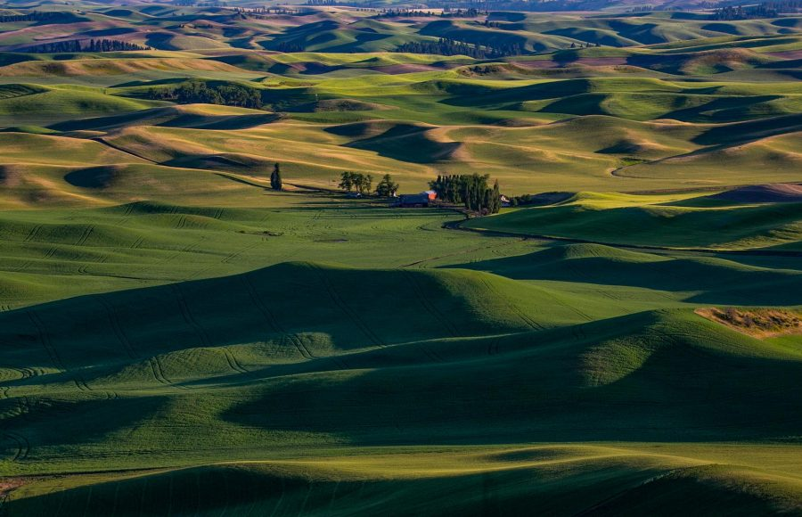 The Palouse- Eastern WA 06 - Truman Holtzclaw